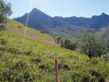 Fireweed and Matanuska Peak