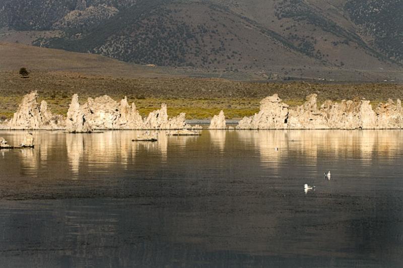 Tufa and gulls