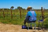 Artist in the vineyard