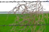 Barbed Wire and Tumbleweed