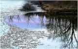 Pond-Reflection.jpg