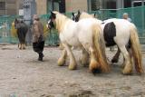 Horse market 2.jpg