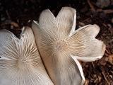 mushroom7.jpg