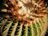 cactus-6.jpg