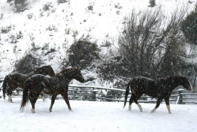 Horses, Buckskin area, Pocatello, Idaho