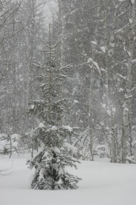 Winterstorm in the Mountains DSC_2463.jpg