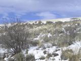 sagebrush hillside in winter P1010005.jpg