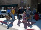Greyhound Pets of America -  Central Texas Meet and Greet