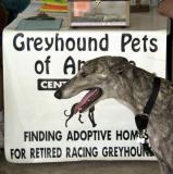 Greyhound meet and greet in Hancock