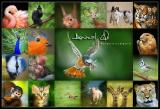 Animal Life logo