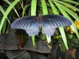 d'un papillon bleu