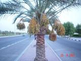 Doha , 3 .jpg