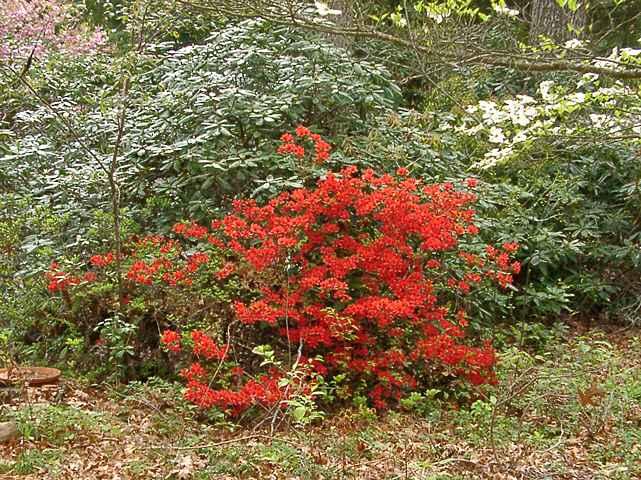 Sherwood Red