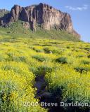 Superstition Mountains - Spring 2005