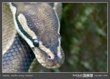 01 snake.jpg