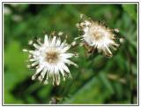 Flowers0044.jpg