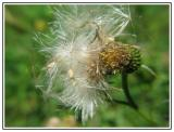 Flowers0047.jpg