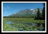 Mountain and Lilies