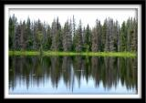 Reflections on Private Lake
