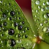 Dew (*)