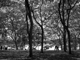 Under the trees / Bajo los arboles