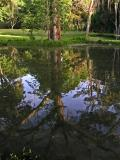 Reflected tree / Arbol reflejado