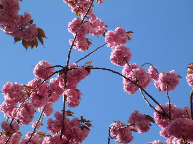 Springtime in rue de Vaugirard - April 2005