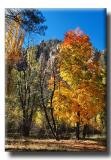 Falls Colors Along Oak Creek Canyon