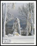 Snow Blasted Trees