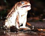 singing-frog.jpg