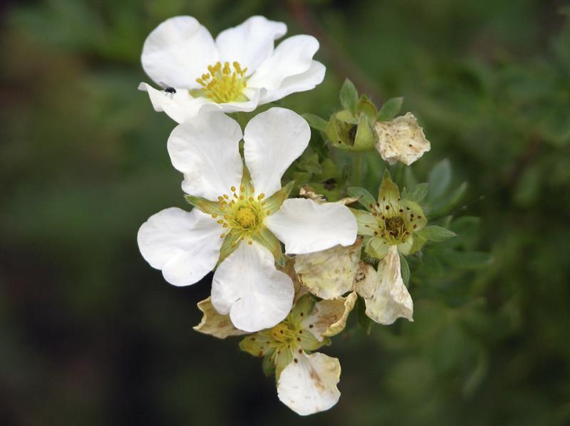 Mature Flower.jpg
