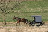Amish on the way to church