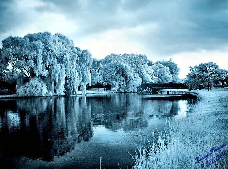 Infrared Reflections on a Cloudy Day