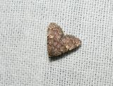 Common Idia (Idia aemula)