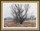 Tree #204