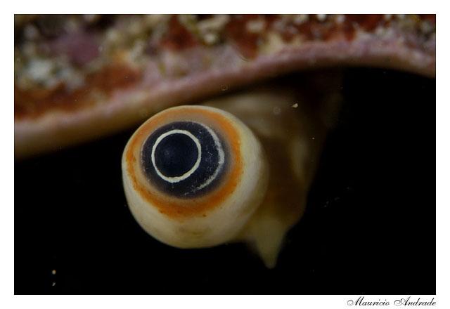 Olho da Concha
