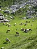 Alpages sous la Pointe de Balafrasse