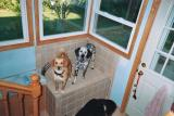 How do you get two rambunctious boy dogs to jump up to have their paws washed?