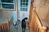 That's all, folks!  The crew gives their approval for the new digs. (yes, they do use the jingle bells to ask to go out)