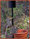 Squirrel up Post