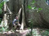 400 years old roots