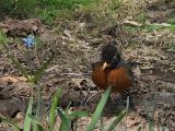2005-04-06 Robin