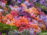 KodakChrome Color
