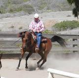 Arabian horse shows off at Wrigley Ranch