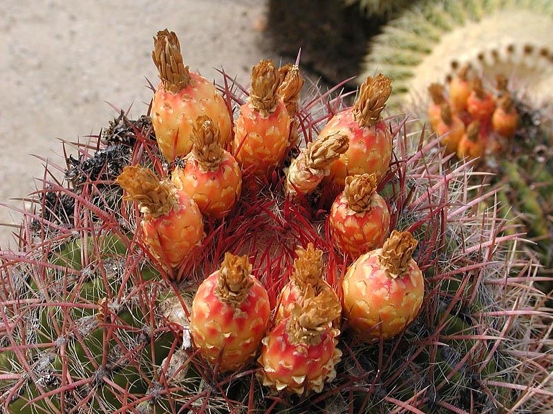 Wrigley memorial garden cactus