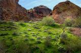 Camelback green