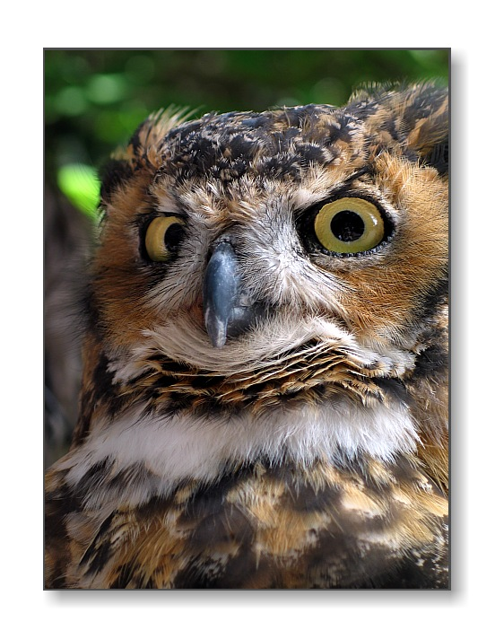 <b>Zack the Owl</b><br><font size=2>Animal Kingdom