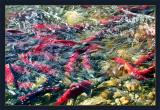 Salmon Run - enmass