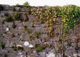 Cahirciveen Workhouse wall