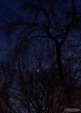 quarter moon lit trees